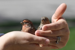 Lori's hands & finches